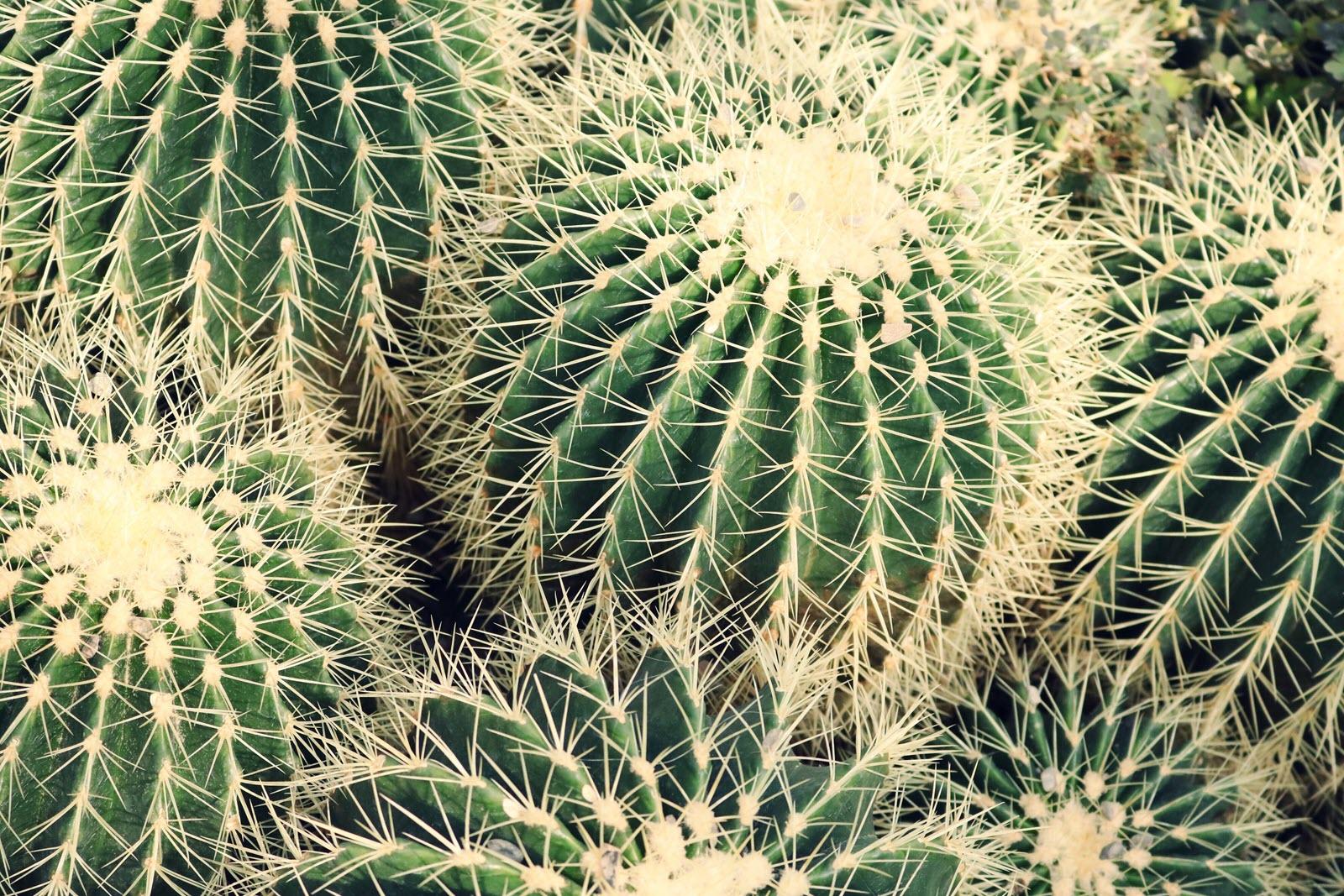 Botanical Cactus