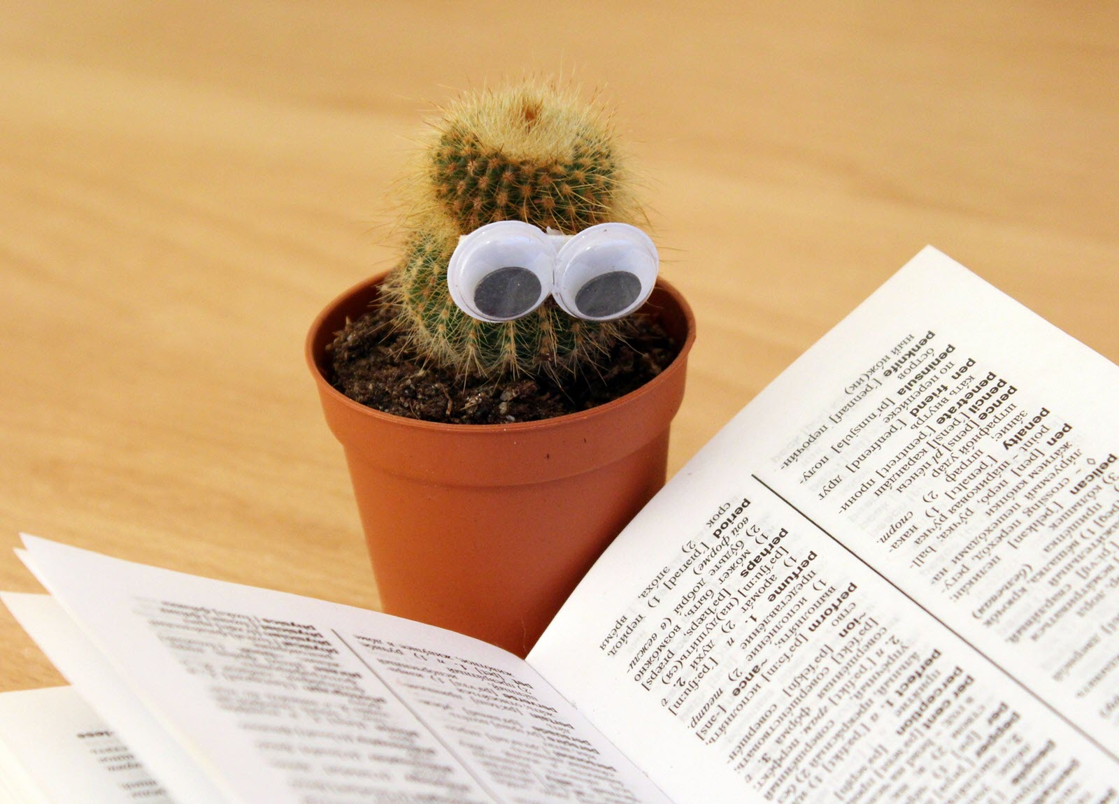 Cactus with Googly Eyes Reading a Book